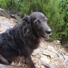 Mit Hunden in Spanien reisen - Teil 1