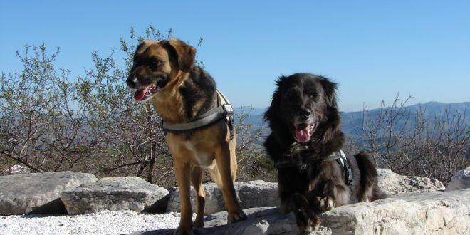 Mit Hunden in Spanien reisen – Teil 1