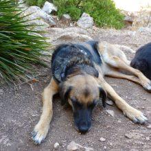 Mit Hunden nach Spanien - Teil 2
