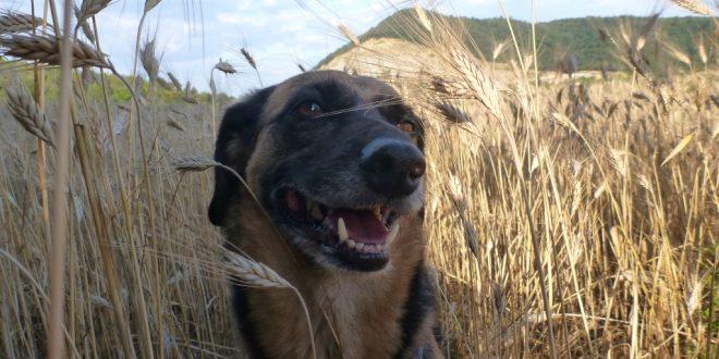 Mit Hunden nach Spanien – Teil 2