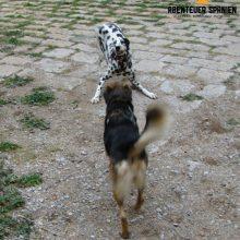 Tierische Erlebnisse - Hunde in Spanien
