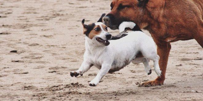 Tierische Erlebnisse – Hunde in Spanien