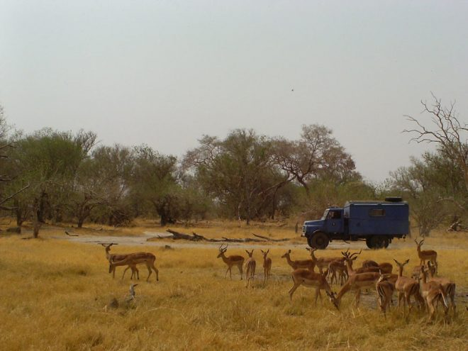 moremi-nationalpark-botswana