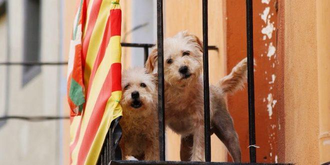 Wie leben Hunde in Spanien - ich frage nach!