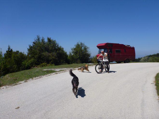Luna läuft nur noch ein paar Meter neben dem Bike her