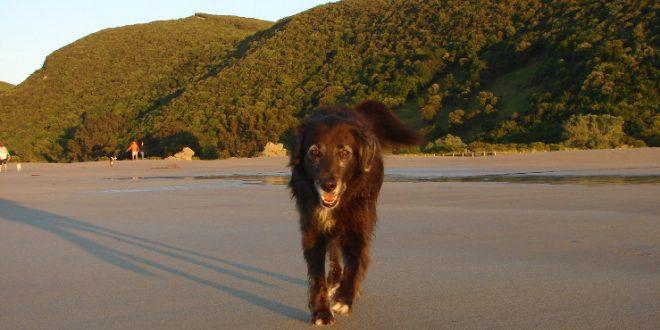 Mit Hunden durch die Balkanstaaten: Die Einreisebestimmungen