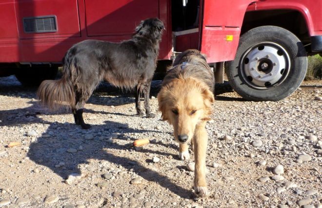 Wir wollen helfen: Streunerhunde in Griechenland