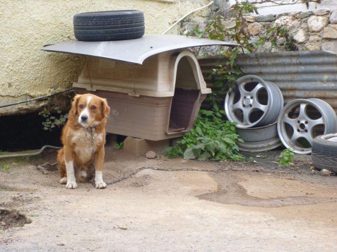Kettenhunde gehören hier noch zum Alltag