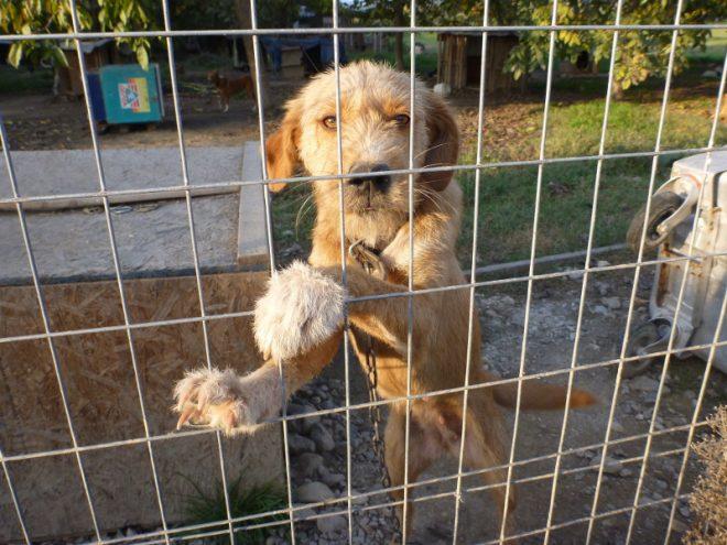 Die Tierheime platzen in Griechenland aus allen Nähten