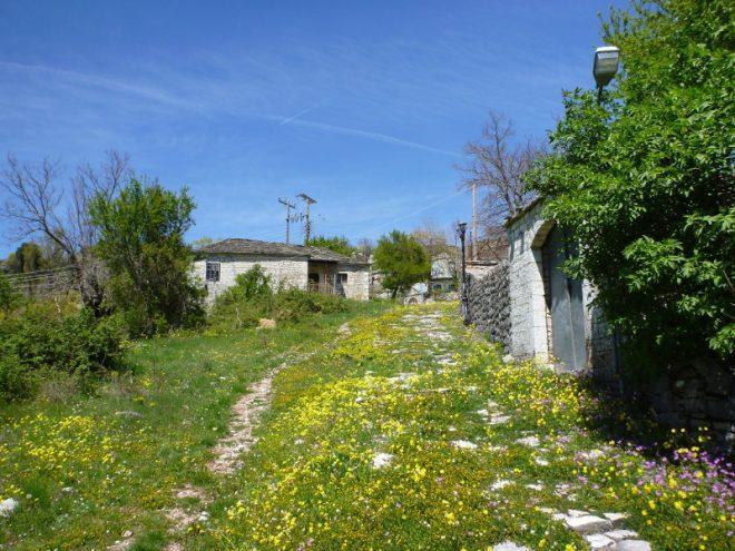 Kalarites im Frühling