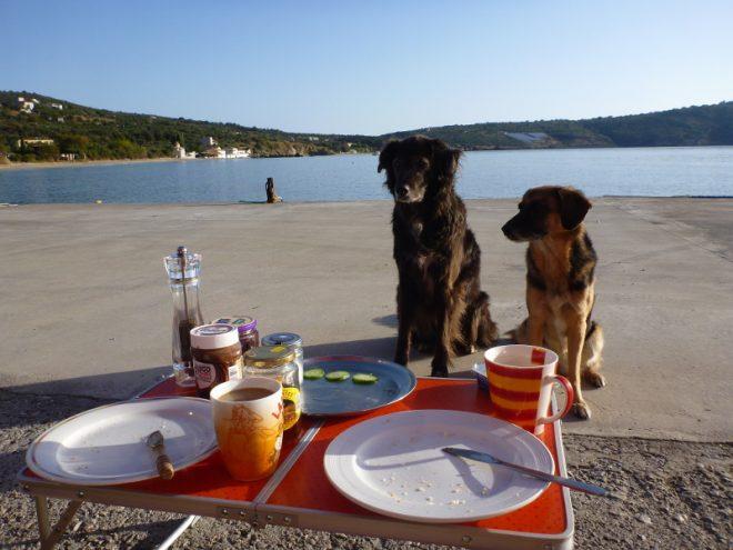Frühstück - Nima Ashoff