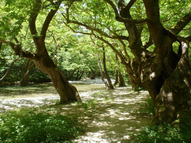 Ein kraftvoller Ort mit alten Bäumen
