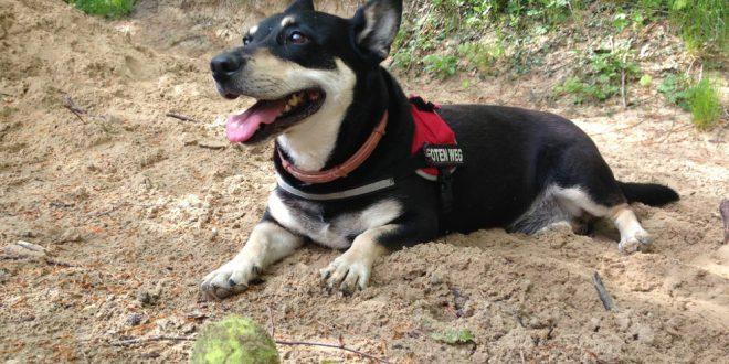Mit altem Hund auf Reisen, Teil 3