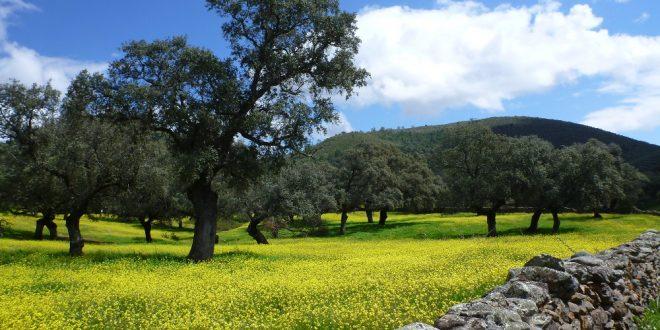 Von Andalusien in die Extremadura - unsere Highlights