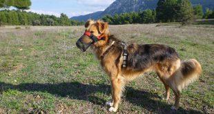 So schützen wir unsere Hunde vor Giftködern
