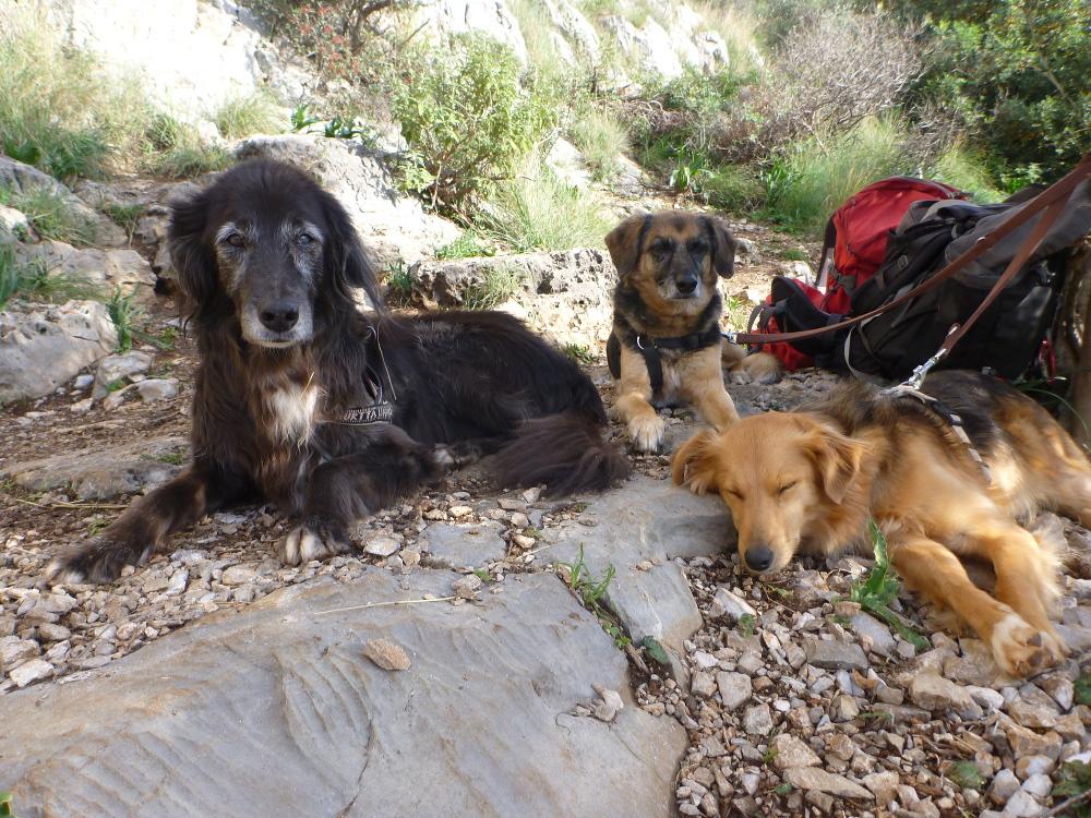 Mit Hunden im Wohnmobil leben