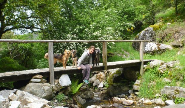 Stressfreies Hundetraining für Hundeanfänger